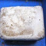 ブナ菌床ブロックが新しくなりました。