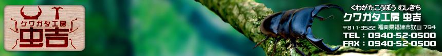 クワガタ飼育と販売情報/クワガタ工房 虫吉