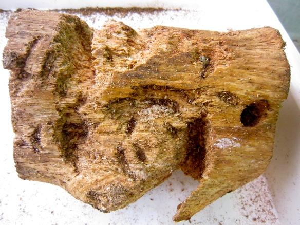 メスが齧った朽ち木
