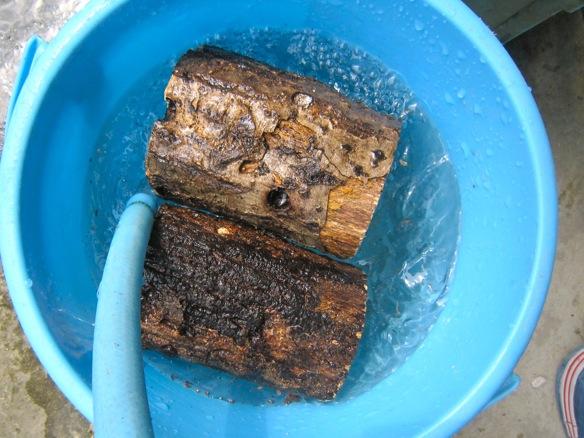 朽ち木を加水します