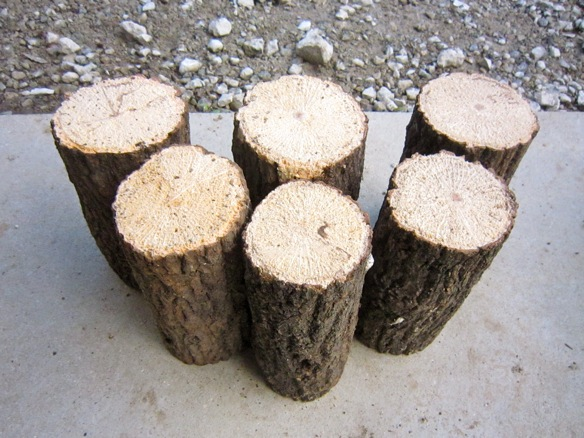 コクワガタの産卵木