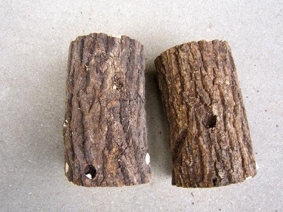 クヌギ産卵木