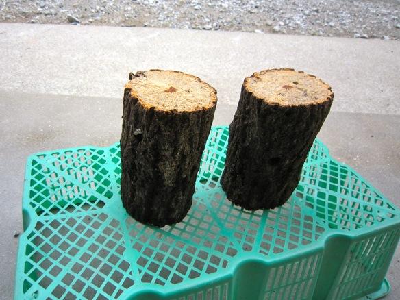 朽ち木の水切りの様子です。