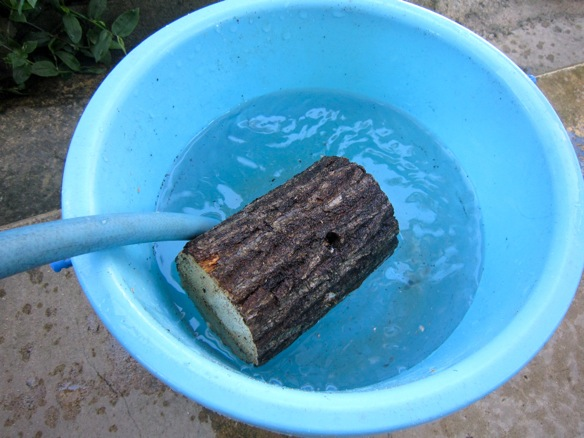 朽ち木を加水しています。