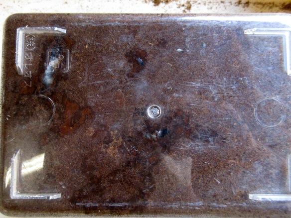 ヤエヤマノコギリクワガタの産卵セットの底からの画像