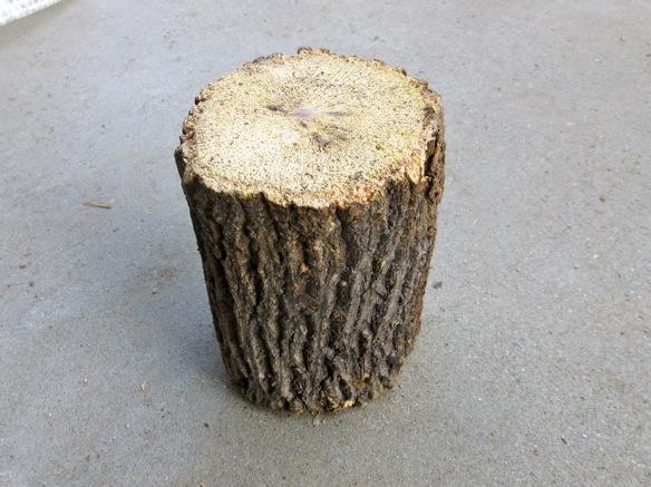クヌギ産卵木(Lサイズ)