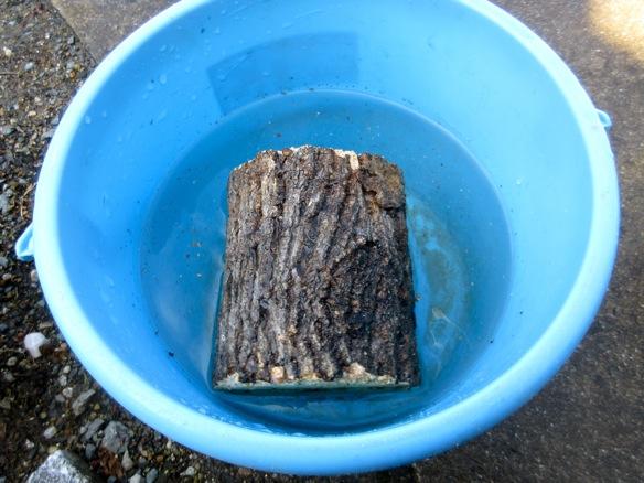 産卵木を加水します