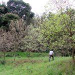 国産オオクワガタの産卵木のセットとアマミヒラタ等の羽化