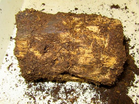 タカラヒラタが産卵した朽ち木です