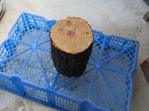産卵木を日陰で干しています