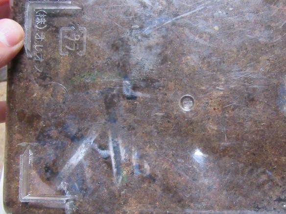 トクノシマノコギリの産卵セットの底の画像