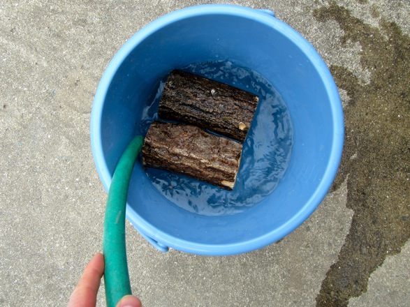 産卵木をバケツに入れて加水します