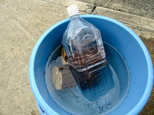 水入りのペットボトルで産卵木に重しをします。
