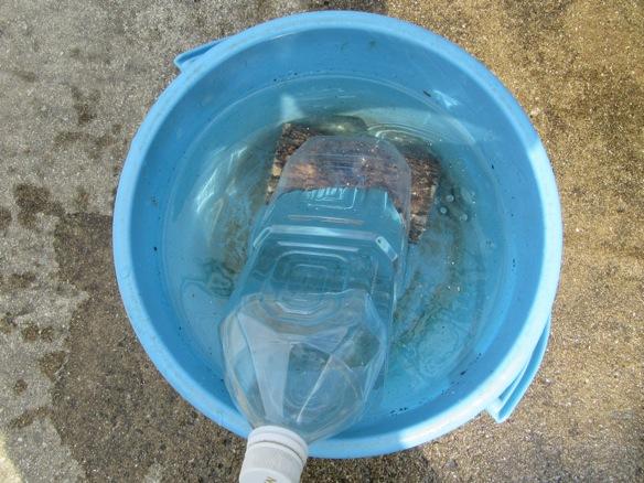 水入りペットボトルで産卵木を押さえつけます。