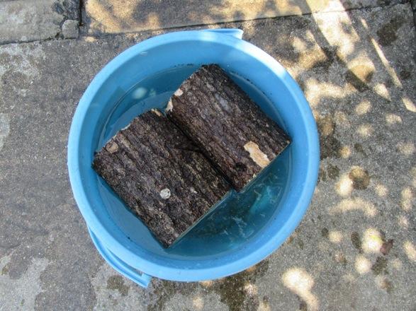 産卵木を水に漬けます。