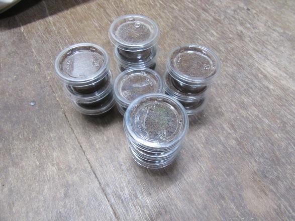 ヤマトサビの幼虫をカップで保管します。