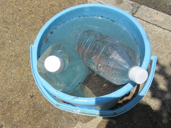 産卵木の上に水を入れたペットボトルで重しをします。