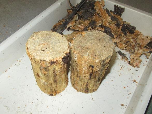 樹皮を全部剥がします。