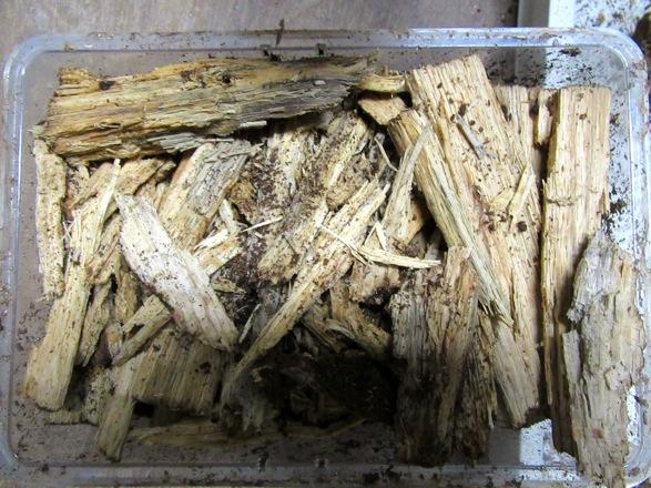 割った後の木屑やマットは、保管します。