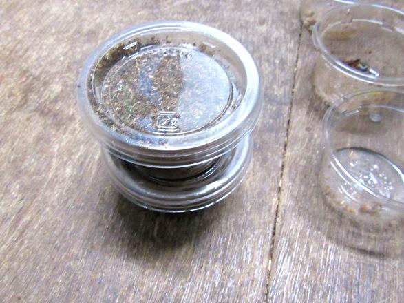 幼虫が入ったカップに幼虫用マットを入れて保管します。