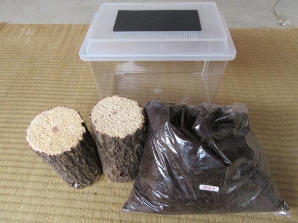 トクノシマヒラタの産卵に使用する主な飼育用品