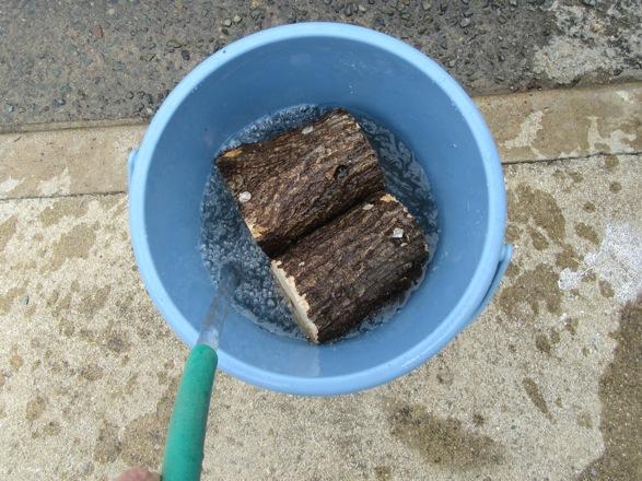 クヌギ産卵木をバケツに入れて加水します。」