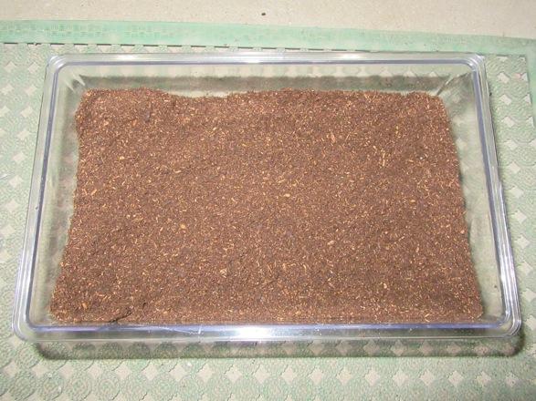 トクノシマヒラタの産卵セットの完成です。