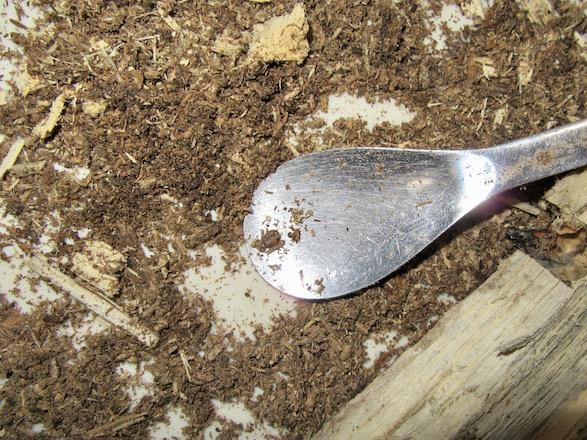 落ちた幼虫は、専用スプーンですくい上げると安心です。