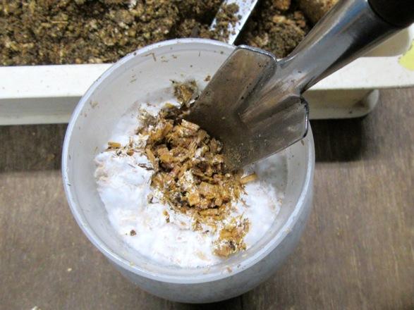 菌糸ビンの表面を専用シャベルで穴を掘ります。
