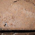 ゴトウヒラタの幼虫の割り出しと菌糸ビン入れ