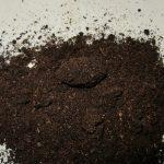 ネブトの飼育状況と離島産ヒラタの大型幼虫